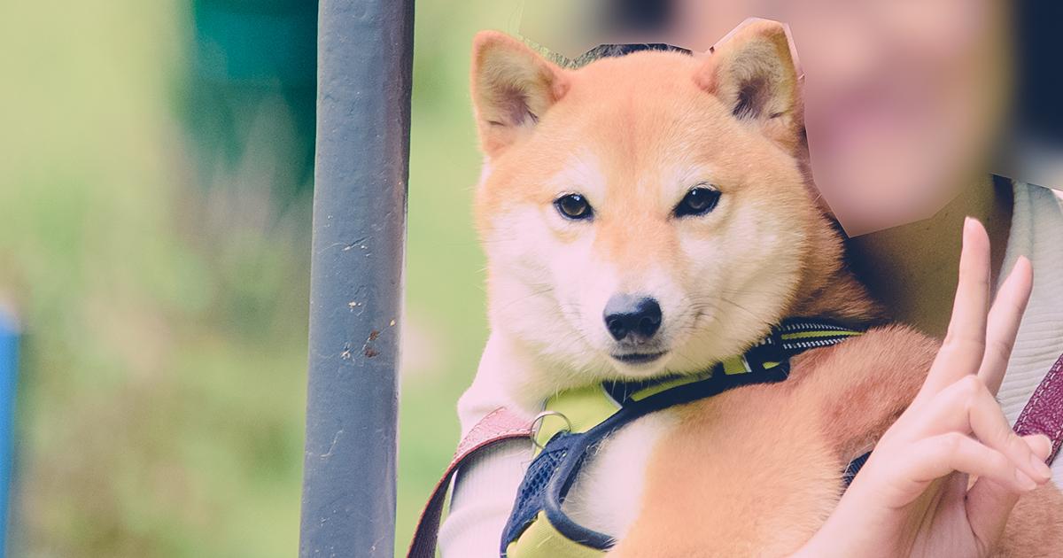 愛犬も乗れる天橋立のリフト | スタジオ・ボウズ