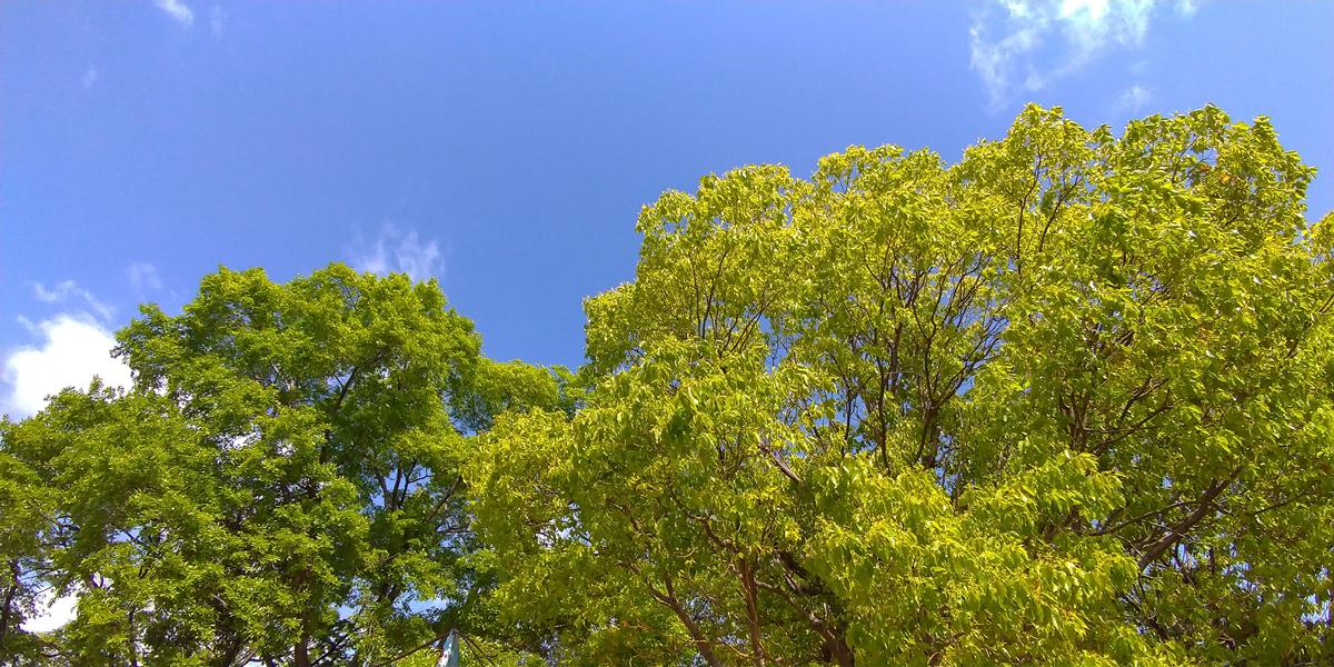 【Photoshop】これがSenseiのチカラか…空模様をカンタンに変えられる「空の置き換え」機能 スタジオ・ボウズ