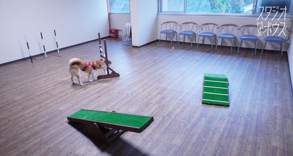 いたれりつくせりで超安心! 柴犬ほかペットと快適に過ごせるホテル・白浜温泉の「犬御殿」|スタジオ・ボウズ